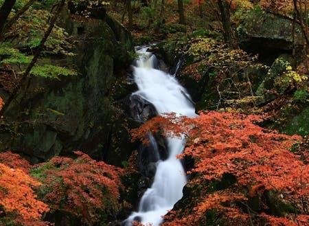 東山地区の名所、滝川渓谷の紅葉。