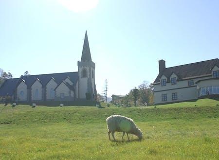 人気の教会と羊