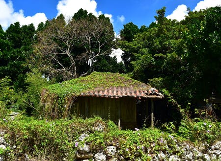 昔ながらの沖縄が残る集落で  『島人のように過ごせる』カフェ