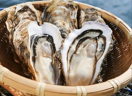 釜石の牡蠣は、大きくて肉厚な身とクリーミーな味わい。