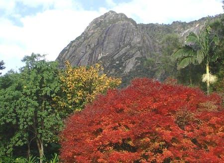 キャノッピ付近から望む本富岳