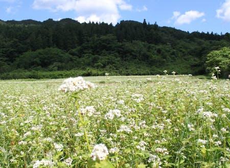 日本の原風景の残る美しい山里です