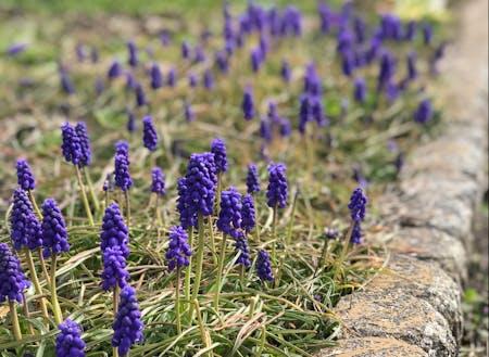 オフィスの庭に春が訪れています...心穏やかになりますように...