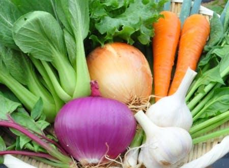 色どり鮮やかで丹精込めて作られるお野菜