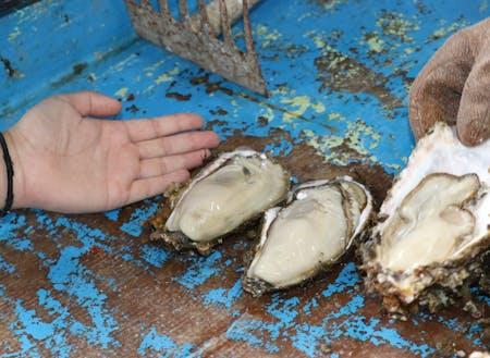 能登特産の「牡蠣貝」。今は旬じゃないけど... その養殖現場や若手従事者の想いを見ることができます。