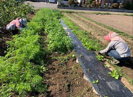 畑の草取り(地域の方のお手伝い)