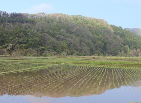 水田を潤す山からの水