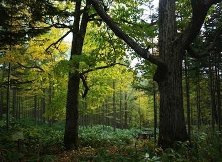 針葉樹と広葉樹が混ざりながら生える森林は北海道ならではです。