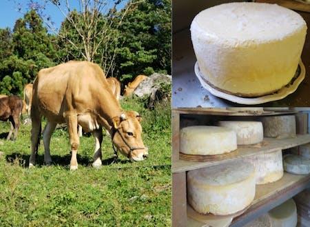 ジャージー牛を飼って、取れたミルクでチーズを作っています。