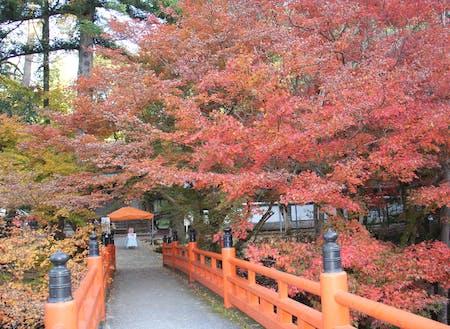 紅葉シーズンは多くの観光客で賑わいます
