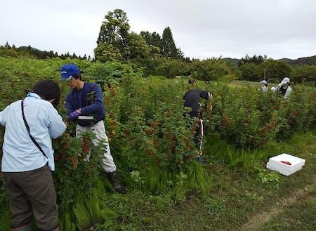 稲作・畑作・果樹・きのこ等、ひとくちに農業といっても多様です。