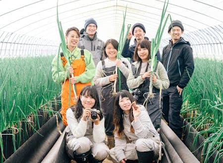 軟白ねぎの収穫体験
