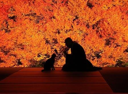 豊岡市のおすすめスポット!秋に見頃の色鮮やかなドウダンツツジ