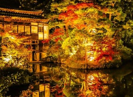 ミシュラン1つ星の神社の紅葉ライトアップ。桜も名所です