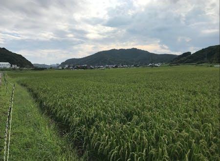 株式会社南張農産が管理している圃場です