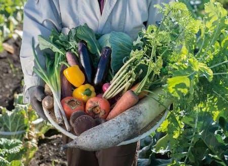 農業は自給自足とビジネスの観点から現代における安定した魅力ある職業の1つです。