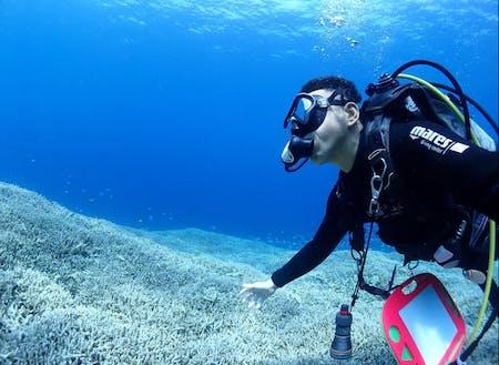 石垣島の素晴らしい水中景観