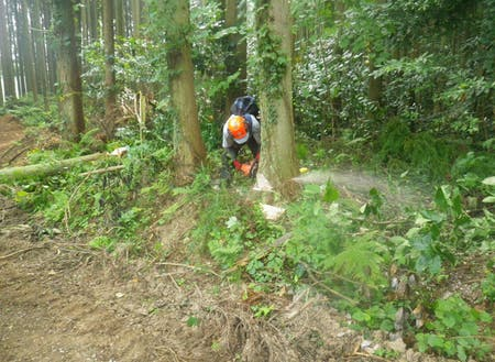 適切に間伐を行うことで、利益を生み出すとともに山林の環境を維持します。