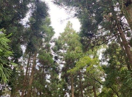 ログハウスの裏にある杉林