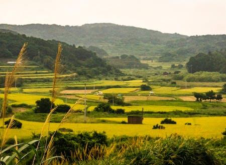 昔ながらの田畑が広がりますが、年々耕作放棄地が増えてきています。