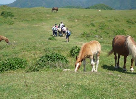 放牧地では牛や馬がのびのび暮らしています