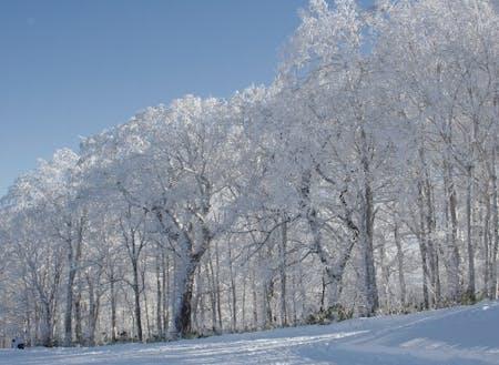市内で見れる樹氷