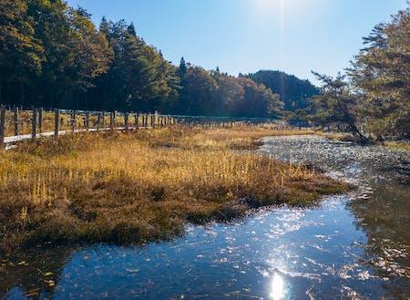 約12万㎡の美しい湿地帯 樫原湿原