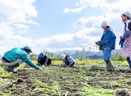 農作業体験