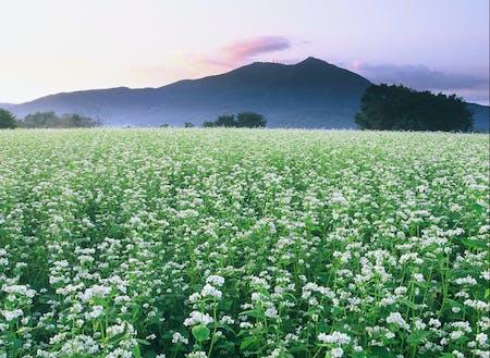 県内2位の生産量を誇る「常陸秋そば」はほんとうに美味しいです