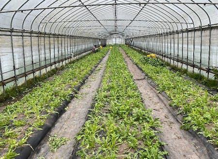 少量多品目の農業を展開してます。