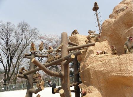 入園無料の「未来へはばたけ山田製作所桐生が岡動物園」