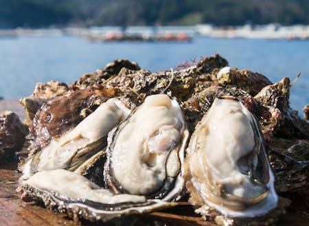 特産品の殻付き牡蠣