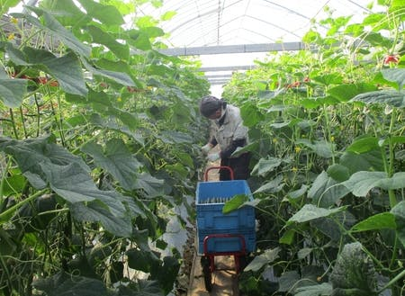 研修では農業に関するノウハウを習得できる。