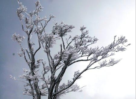 白銀に輝く樹氷☆
