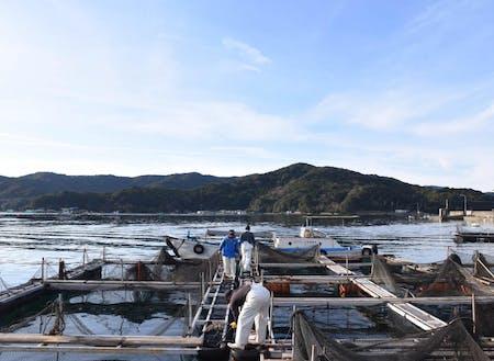 南勢水産さんの鯛養殖棚
