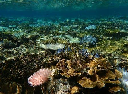 美しいサンゴ礁と色とりどりの魚に出会える海