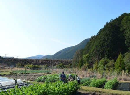 自然溢れる場所での収穫作業