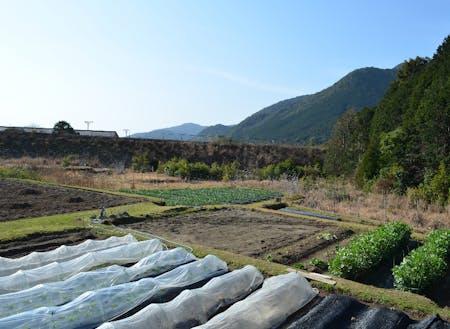 様々な路地野菜の栽培