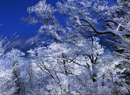 樹氷の森。雲一つない大パノラマ