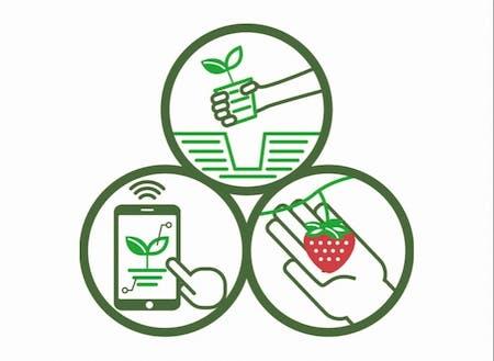 定植、収穫、およびデータ管理は人の手で行います。