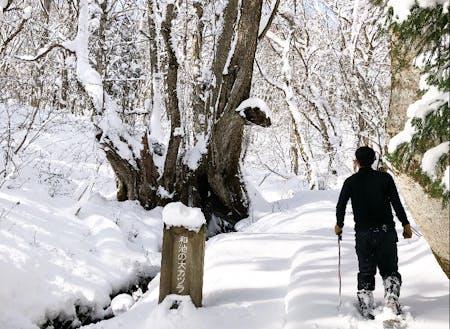 香美町村岡区「たじま高原植物園」山間部には多くの積雪