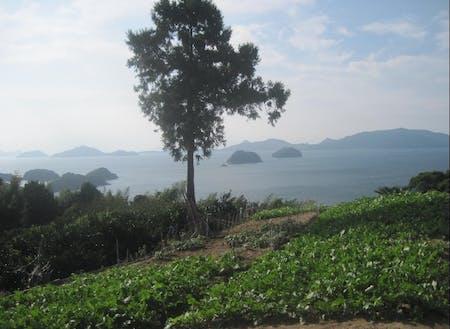 美しい自然の中、農業等で地域の活性化に取り組みます。