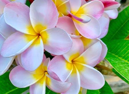 道端には南国特有の花が咲き彩る