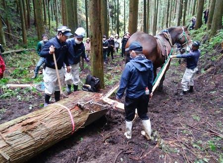 林業の再興も大きな課題です。