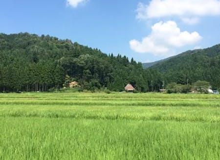 田んぼが広がる自然豊かな土地