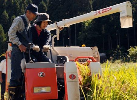 稲刈り体験中