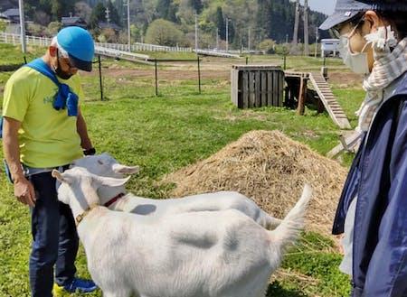 ナベちゃん農場のヤギさん