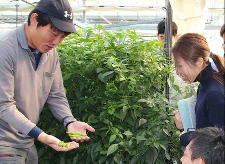 施設園芸農業の凄さ、ぜひ体験してほしい!