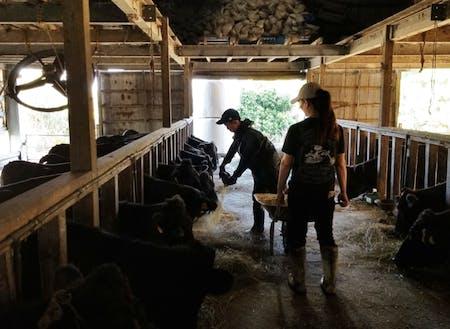 畜産農家体験の様子