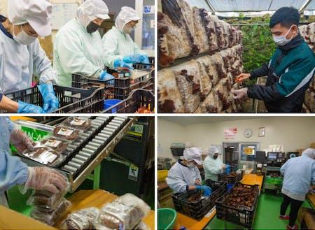 食料品製造業(栽培管理・収穫・パック詰め・出荷)